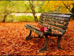 Blog_Autumn Idioms