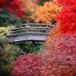 Blog_Image-Autumn Leaves