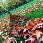 Blog_Raking Leaves
